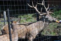 Z jelení obory